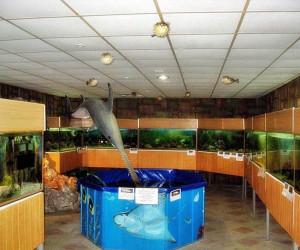Зал для осмотра рыб