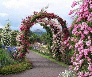 Плавучий рынок и Сад Роз
