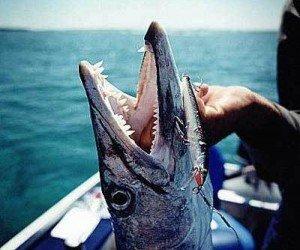 Рыбалка в открытом море с острова Чанг