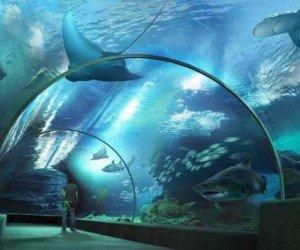 "Океанариум ""Siam Ocean World"" в Бангкоке"