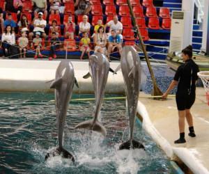 Шоу дельфинов в Варне