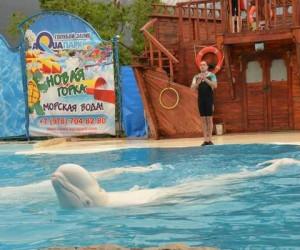 Ялтинский дельфинарий «Акватория»