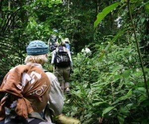 Треккинг в джунглях