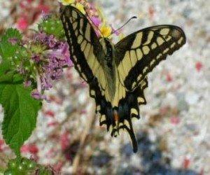 Филеримос и долина бабочек