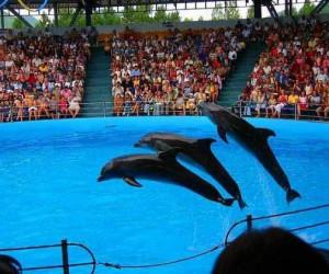 Дельфинарий Варны