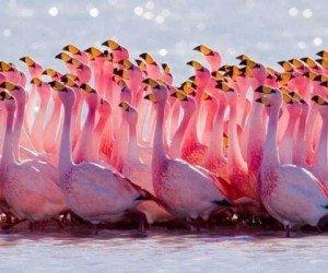 Морская прогулка на остров Фламинго