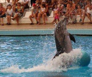 Аквапарк и дельфинарий Анталии