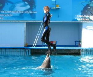 Ливадийский дельфинарий
