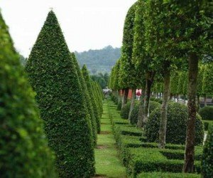 Тропический сад деревни Нонг Нуч