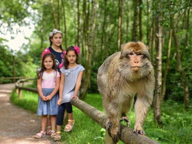 Парк обезьян