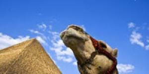 Как вести себя туристу на отдыхе в Египте