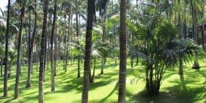 Тенистая территория парка