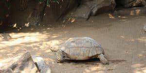 Огромные черепахи