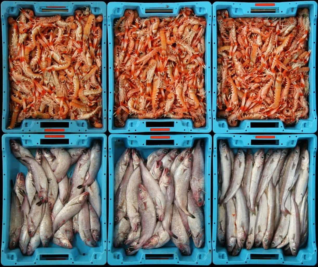 Лотки со свежей рыбой