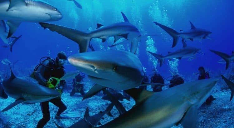 Акула в Шарм эль Шейхе