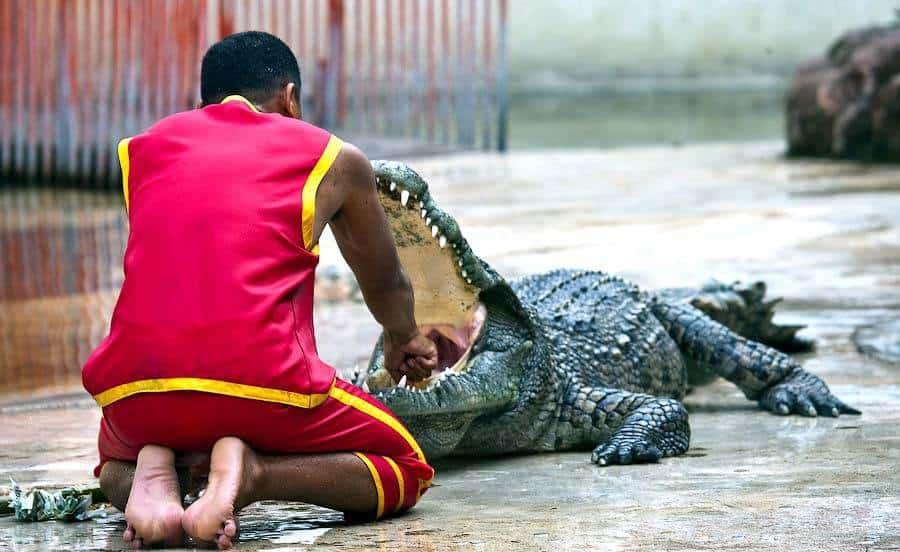 tailand zoo