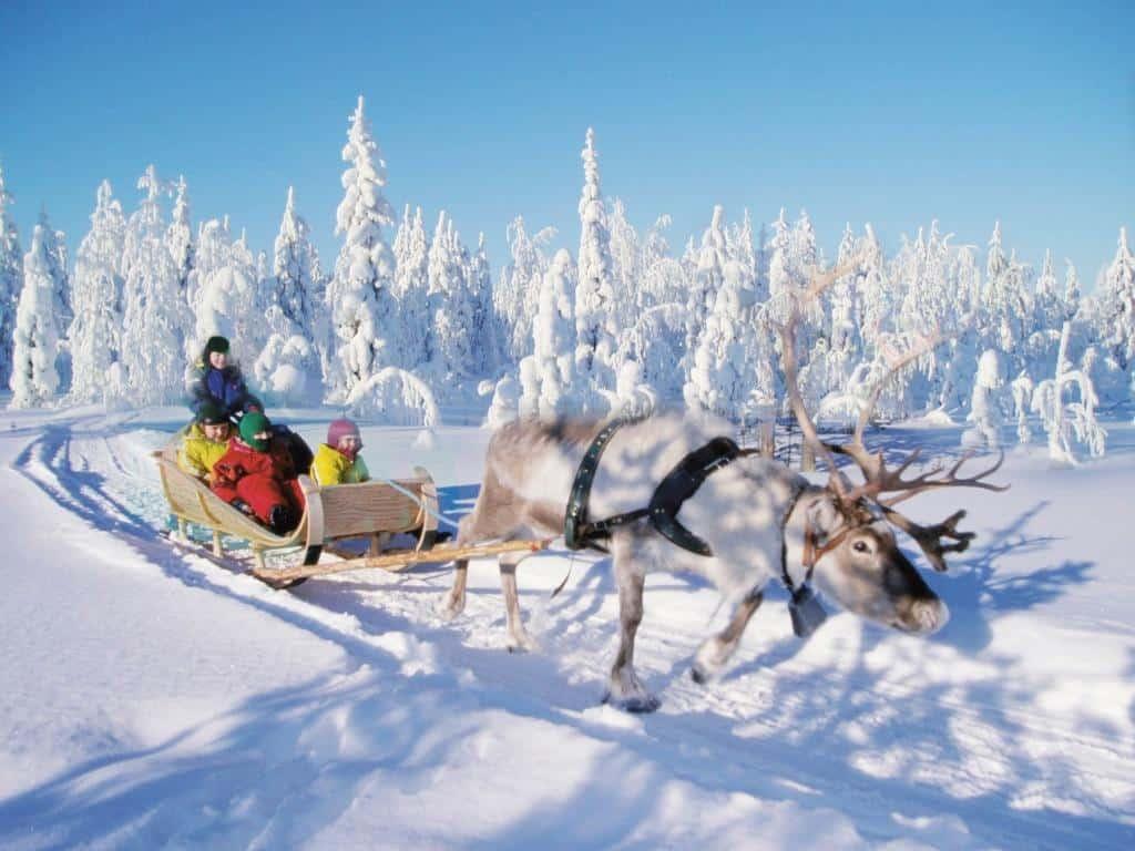 Поездка на олених упряжках в Финляндии