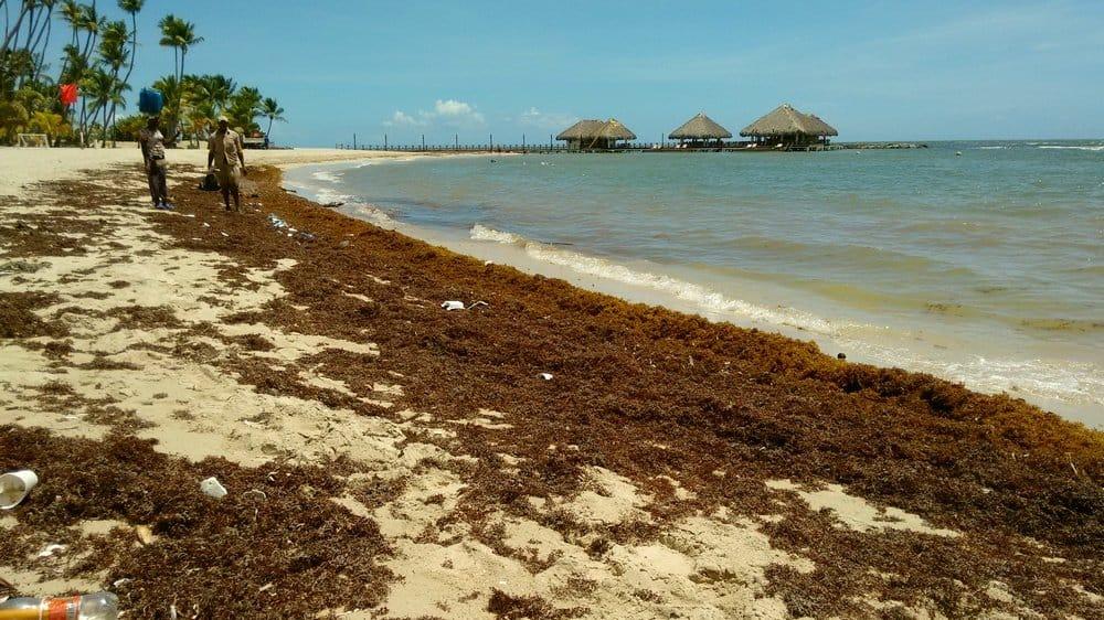 Водоросли на пляже в Доминикане