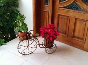 Цветы на Рождество в Доминикане
