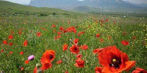 Гора Карадаг