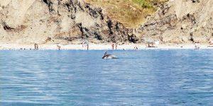 Дельфины рядом с берегом