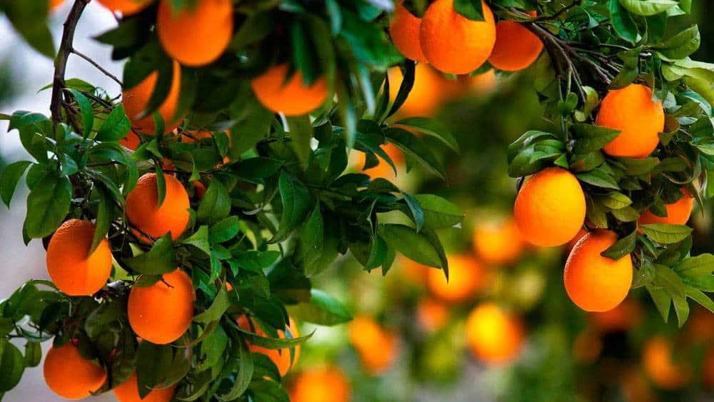 Сезоны фруктов на Кипре