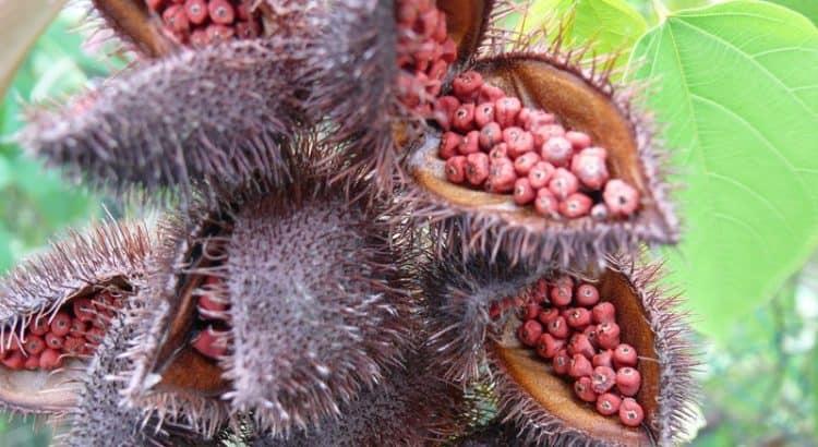 Сезоны фруктов в Египте