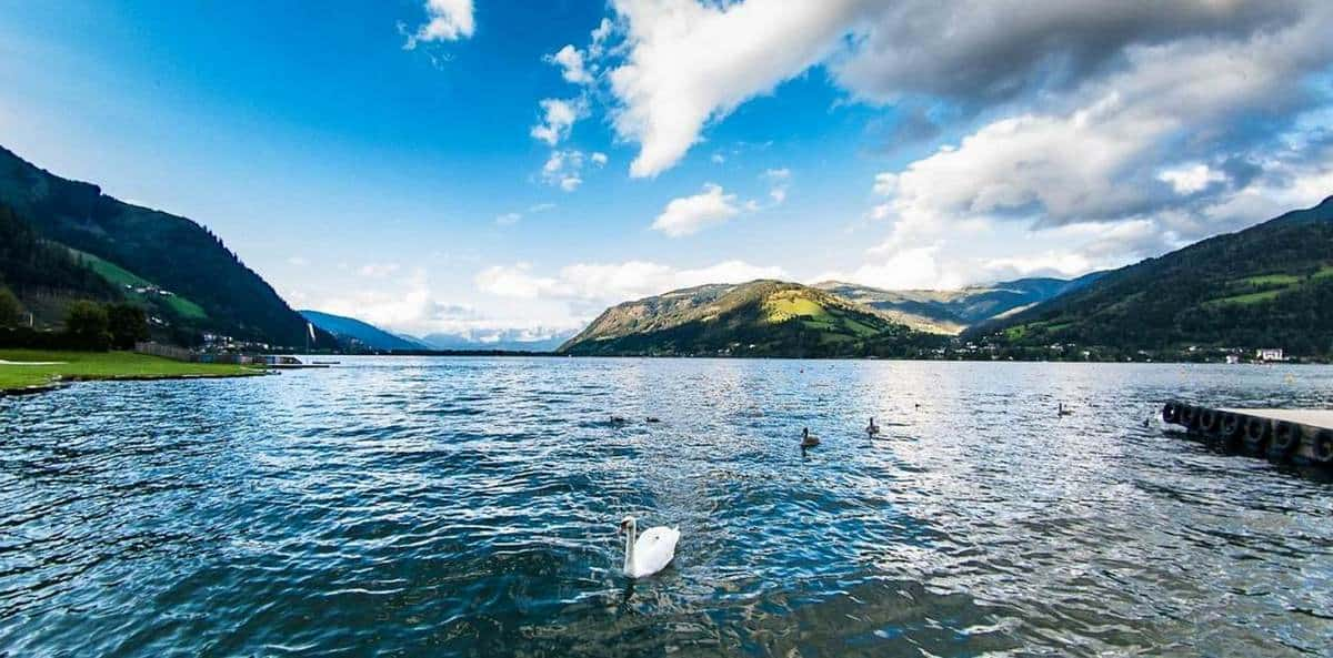 Лебеди на озере Целль