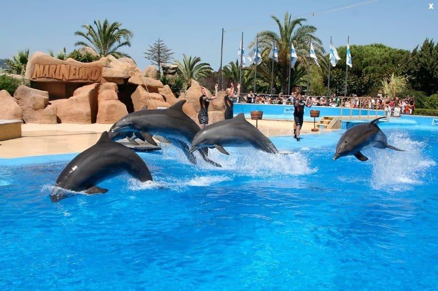 Шой дельфинов