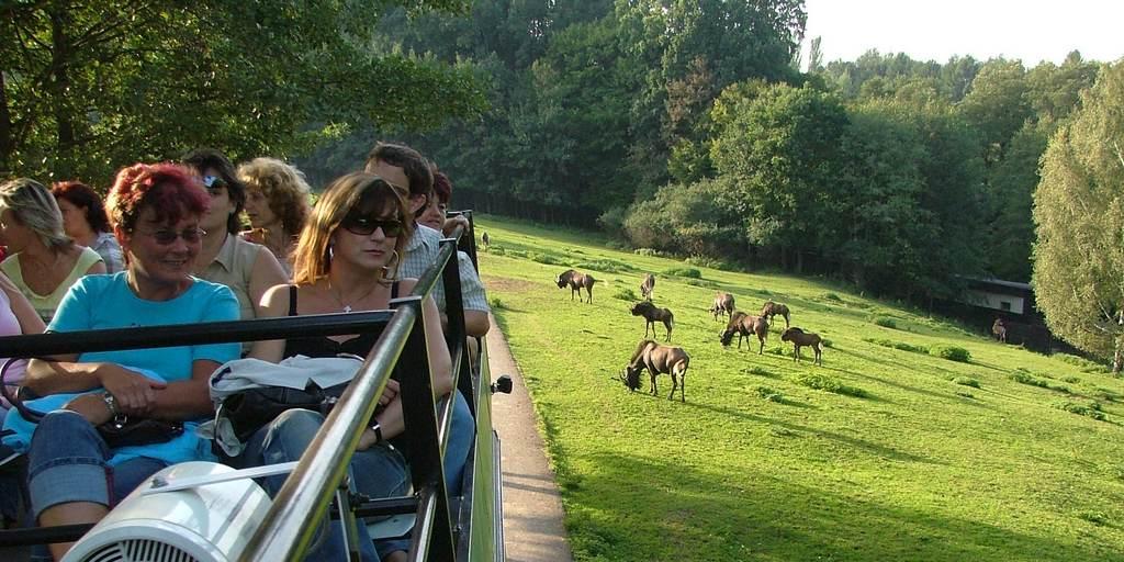 Сафари в Zoo Dvùr Králové nad Labem