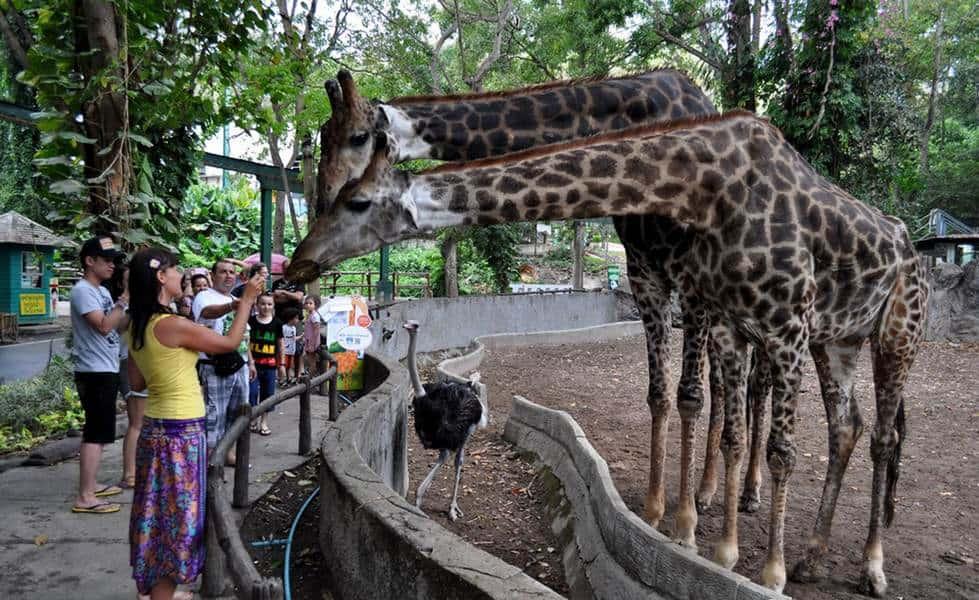 Зоопарк Тайланда