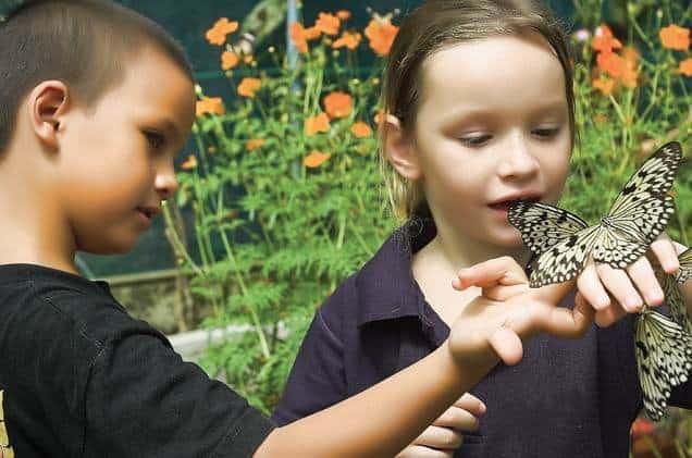 Дети в парке бабочек