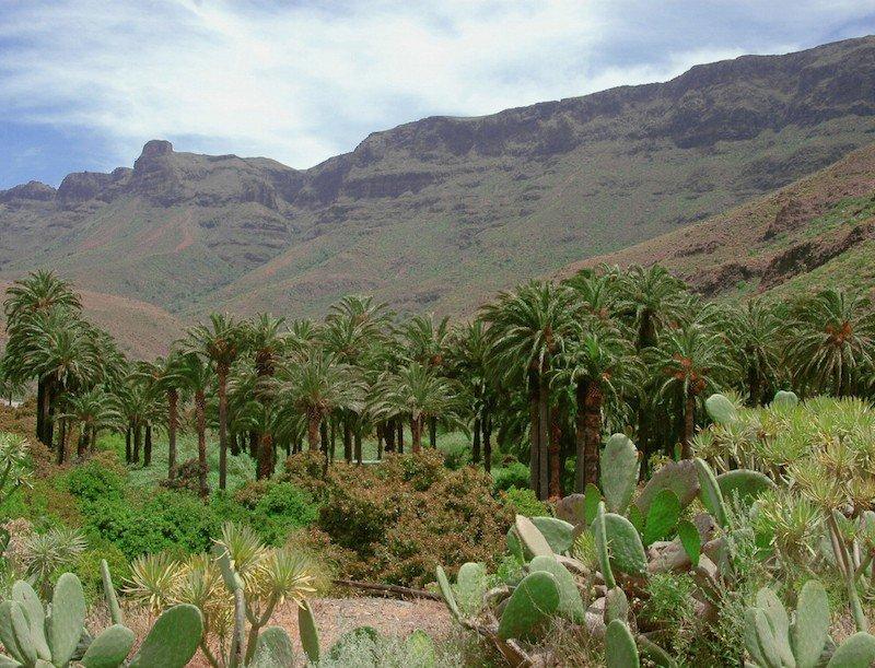 Долина пальм