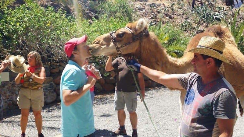 Фото с верблюдами