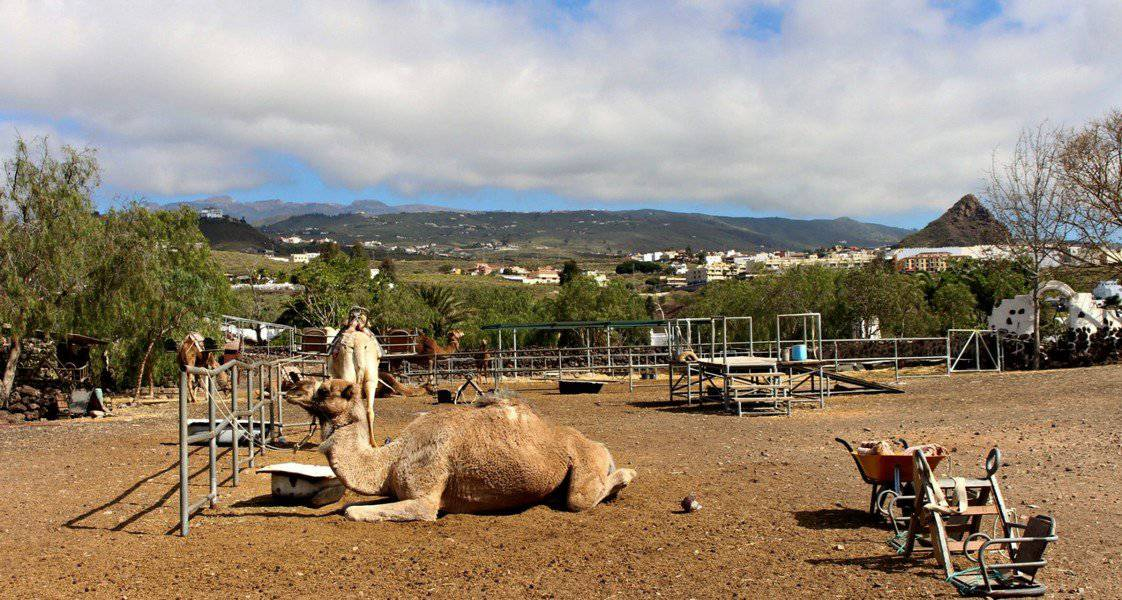 Camel Park на Тенерифе