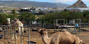 Территория Camel Park