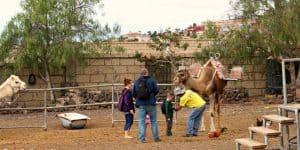 Знакомство с верблюдом
