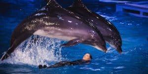 Во время представления в дельфинарии