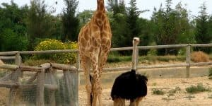 Friguia Animal Park