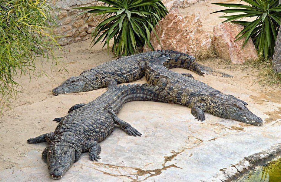 Крокодиловая ферма Jerba Explore