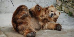Медведь в Рижском зоопарке