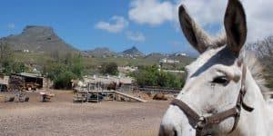 Обитатели Camel Park