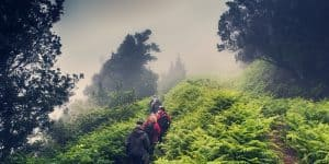 Экскурсии по лесу