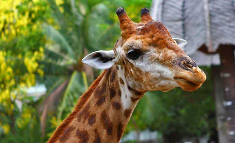 Зоопарк Dusit Zoo