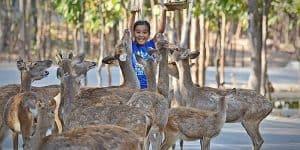 Тсеное общение людей с животными