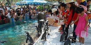 Общение с пингвинами