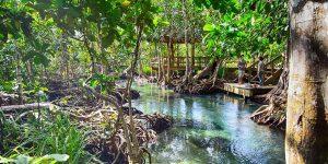 Река где соленая вода встречается с пресной