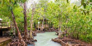 Смотровые площадки у реки