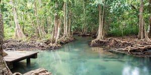Название длиннее самой реки:Pa Phru Tha Pom Klong Song Nam Nature Trail