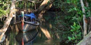 Pa Phru Tha Pom Klong Song Nam Nature Trail